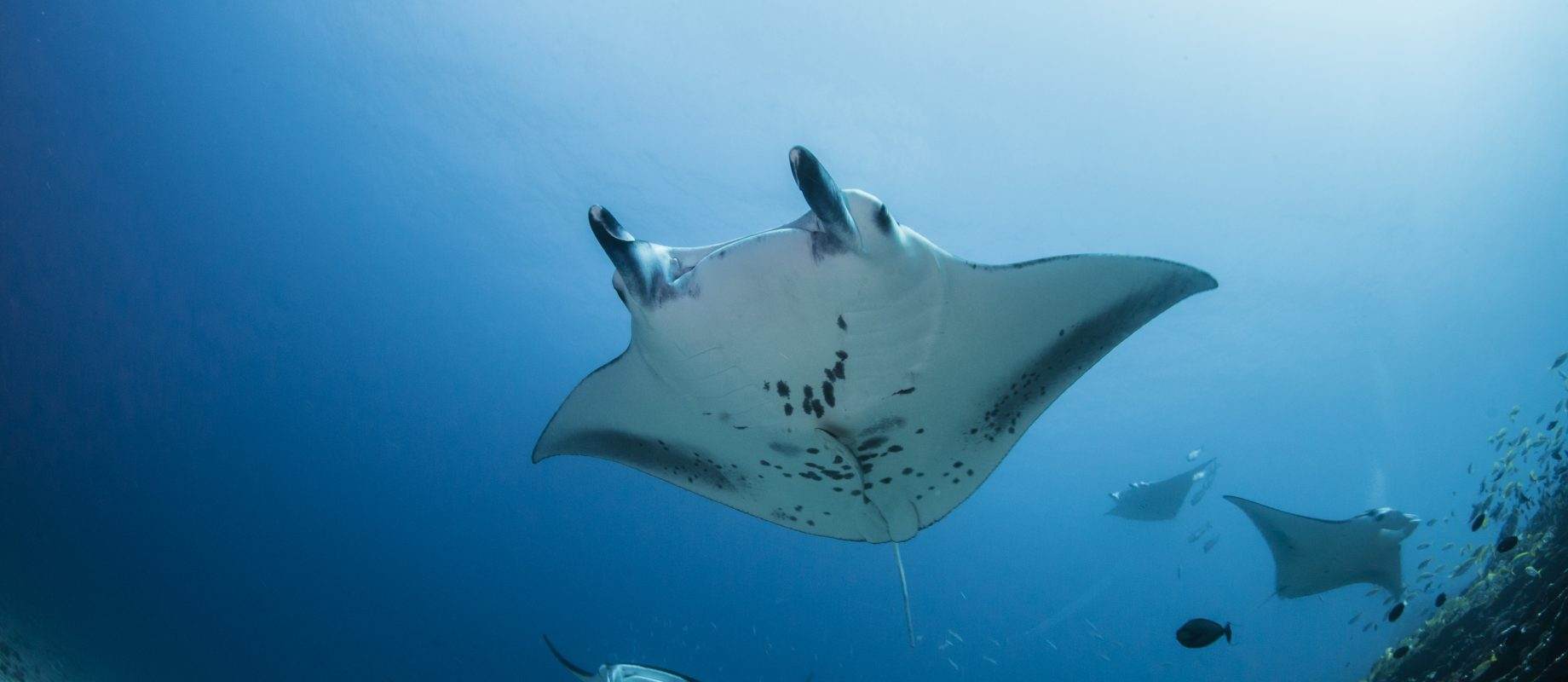 Diving on the Equator